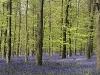 001 – King\'s Wood, Kent