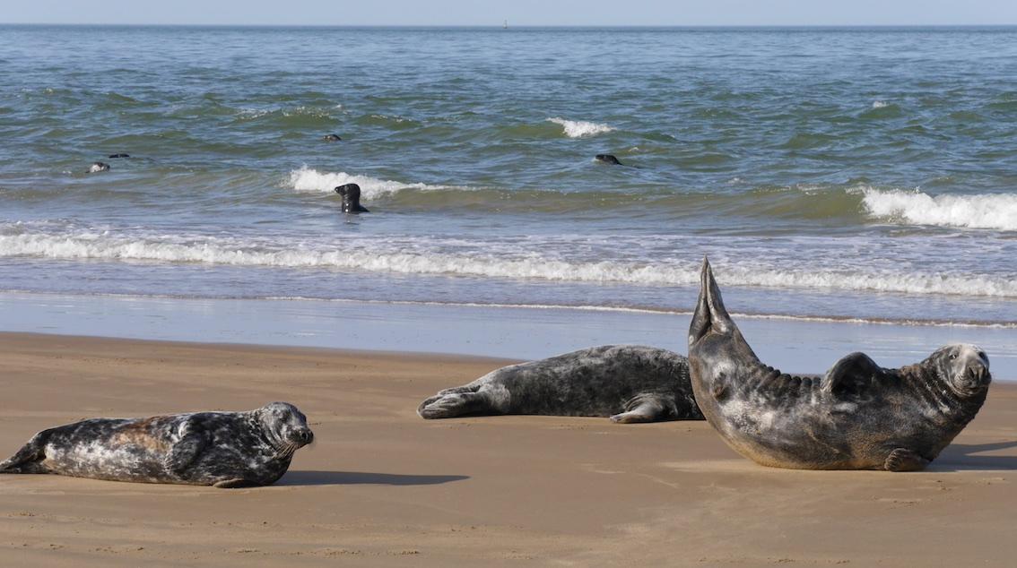 GOODWIN SEALS