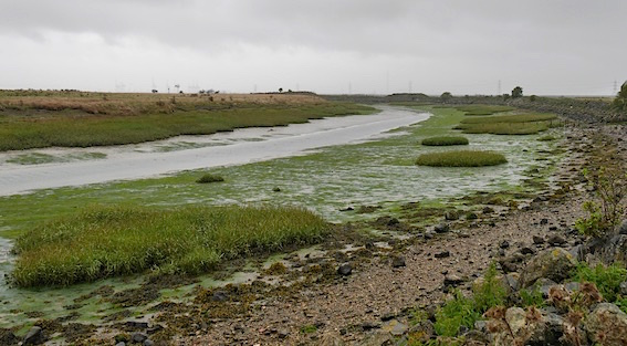 Shoreline walk 64