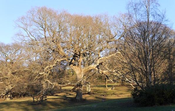 St Helen's Park