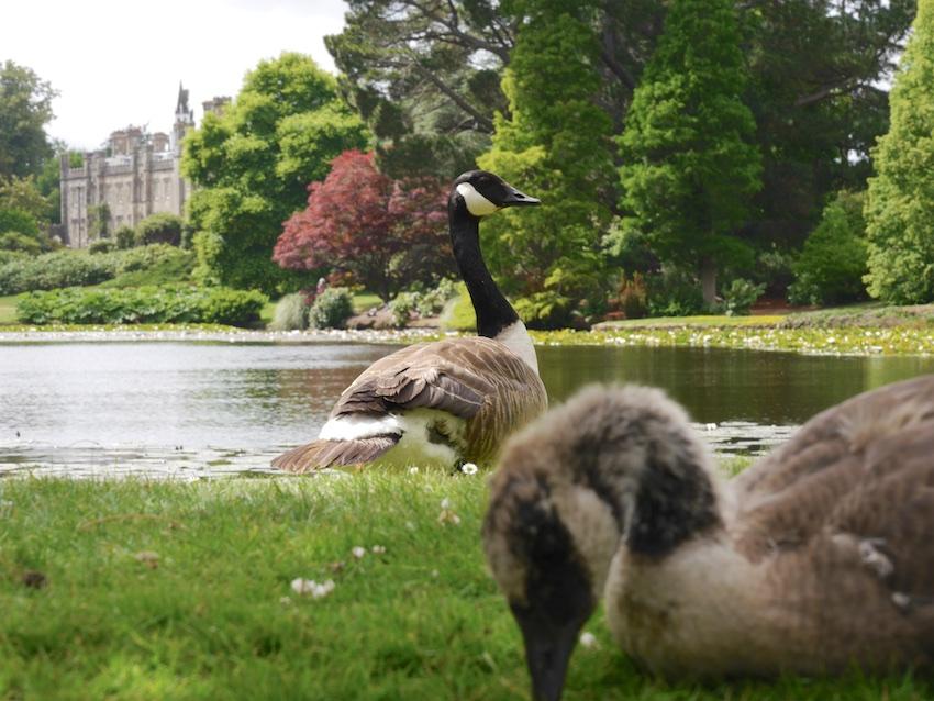 Shelffield Park Gardens