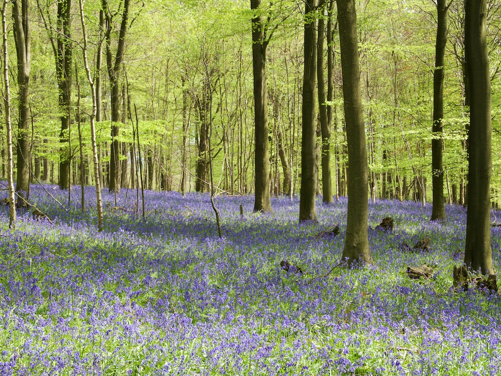 Kings Wood Kent