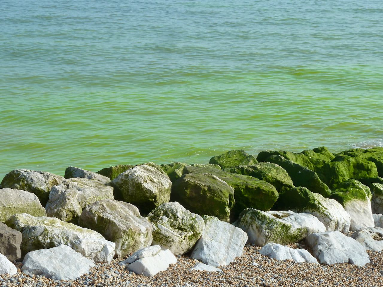 Green sea algae seen off St Leonards, East Sussex