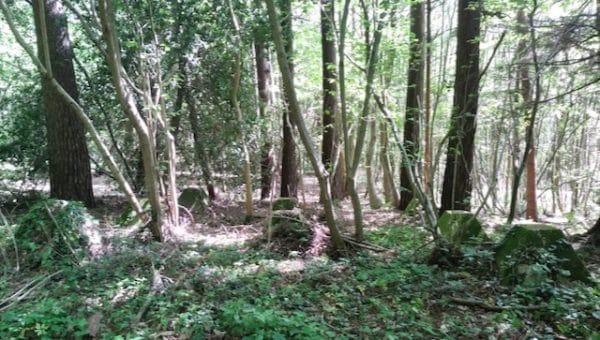 New Cut, near Mountfield, East Sussex